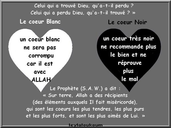 Le coeur Blanc et Le coeur Noir ...