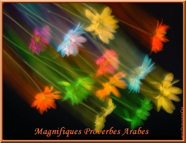 Connu proverbes arabes et divers GL75